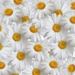Summer background, daisies — Stock Photo