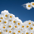 Floral sky background — Stock Photo