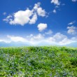 Green field beautiful, flowers — Stock Photo