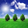 Trees on green field - Foto de Stock