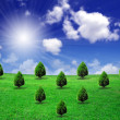 Trees on green field — Stock Photo