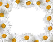Floral frame with place for your text — Stock Photo