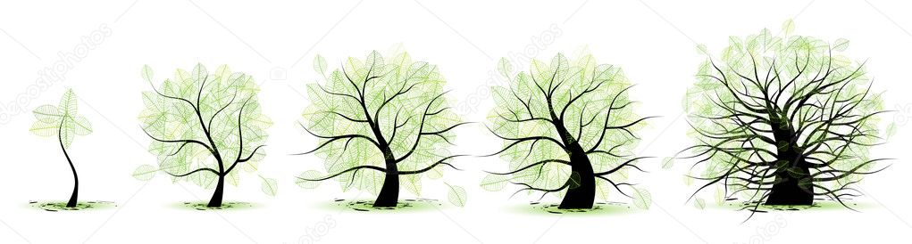 Life stages of tree: childhood, adolescence, youth, adulthood, old age — Stock Vector #2659783