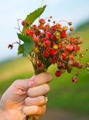 ženská ruka s aromatickými divoké jahodo — Stock fotografie