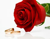 Wedding rings and red rose — Stock Photo
