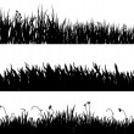 Three variants of black grass — Stock Photo #1276294