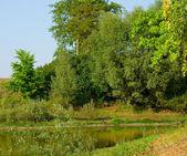 Sommerlandschaft 2 — Stockfoto