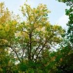 Autumn landscape 2 — Stock Photo #1282908