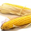 Harvested corn 2 — Stockfoto