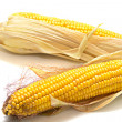 Harvested corn 2 — Stock Photo #1282923
