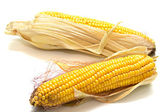 Harvested corn 2 — Stock Photo