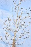 Plant on snow — Stock Photo
