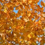 Autumn at the park 2 — Stock Photo #1368277