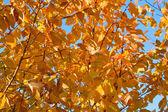Herbst im park 2 — Stockfoto