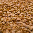 Buckwheat groats — Stock Photo #1428995