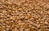 荞麦银币 — 图库照片