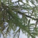 ramos de uma árvore-peles jovens — Foto Stock