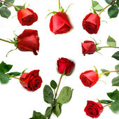 Red roses 2 — Stock Photo