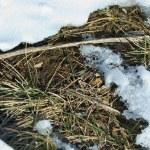 snö och jordens textur — Stockfoto