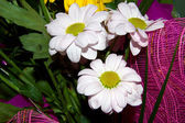 Bouquet from several flowers — Stock Photo
