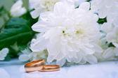 Wedding rings and white chrysanthemum — Stock Photo