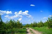 Furtrees en las colinas — Foto de Stock