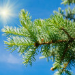Furtree against blue sky — Stock Photo