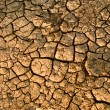 Stock Photo: Dried up cracked earth