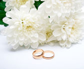 Rings and white chrysanthemum — Stock Photo