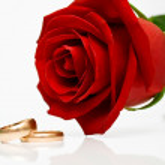 alianças de casamento e rosa vermelha — Foto Stock