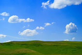 Grass and blue cloudy sky — Stock Photo