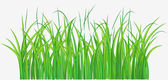 Grassy field — Stock Photo