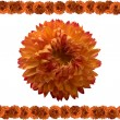Orange flower. — Stock Photo