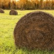 Stock Photo: Country hay