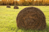 Country hay — Stock Photo