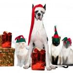 クリスマスのギャング — ストック写真