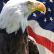 Royalty-Free Stock Photo: American Eagle
