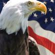 American Eagle — Stock Photo