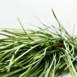 Stock Photo: Pine-tree branch
