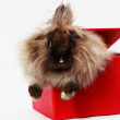 Stock Photo: Rabbit in red box