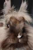 Rabbit close up — Stock Photo