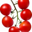 Royalty-Free Stock Vector Image: Tomatoes.