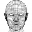 head of the person from a 3d grid — Stock Photo