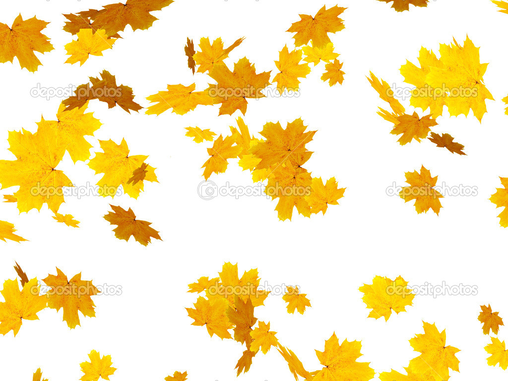 Falling autumn leafs of maple — Stock Photo #1056775