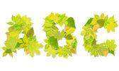 Alphabet - letters with a green leaves — Stock Photo