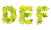 字母-字母与绿色叶子 — 图库照片