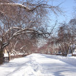 Winter avenue — Stock Photo