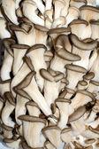 Fresh oyster mushrooms — Stock Photo
