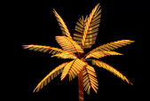 Palm tree decorative — Stock Photo