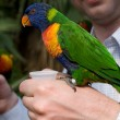 Colorful parrot on a hand — Stock Photo